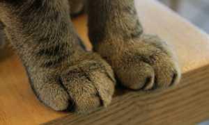 Как отучить кошку царапать мебель и обои?